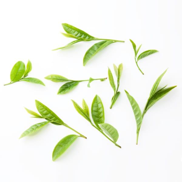 お茶の品種